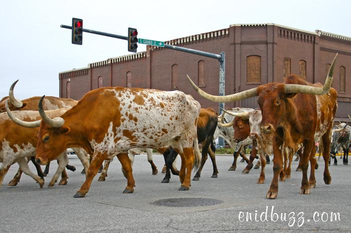 Cherokee Strip Parade in Enid, Ok