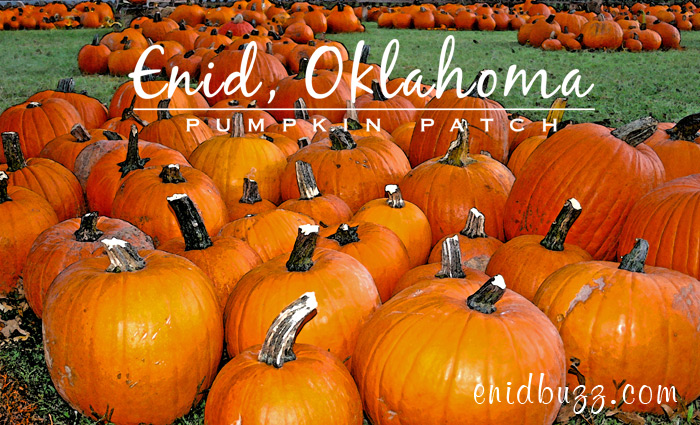 Enid Pumpkin Patch