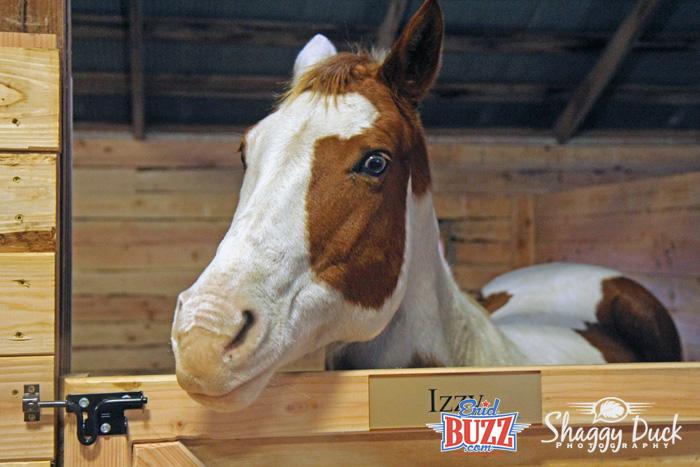 izzy-horse