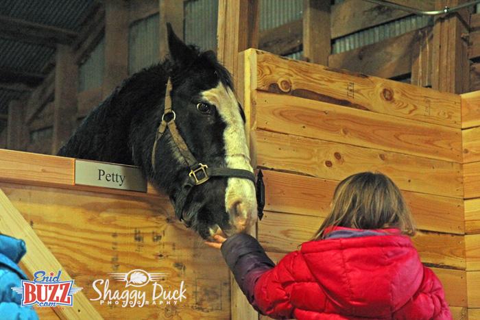 petty-horse