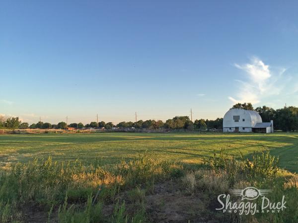 rolling-meadow