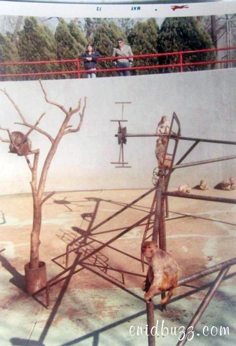 monkey-pit-1972
