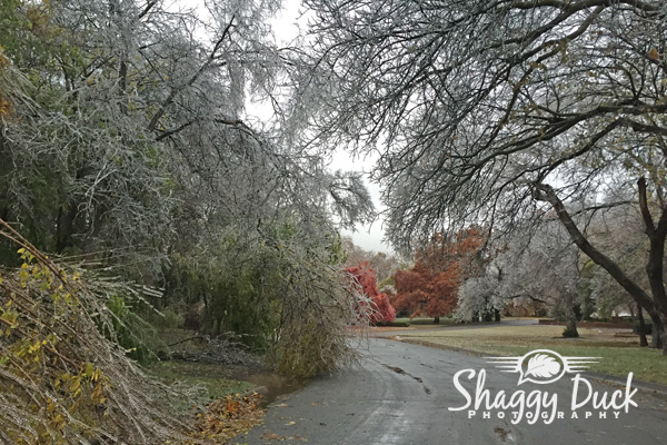 ice-storm-enid-08