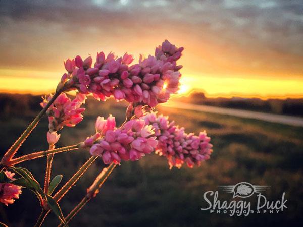 sunrise-flowers