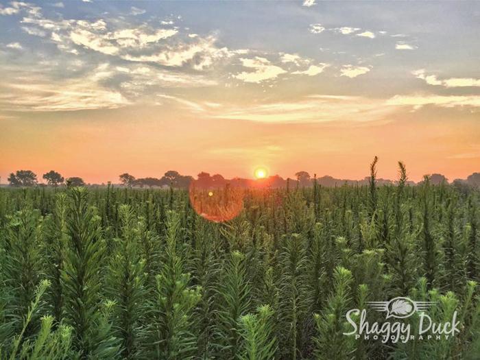 sunrise-july