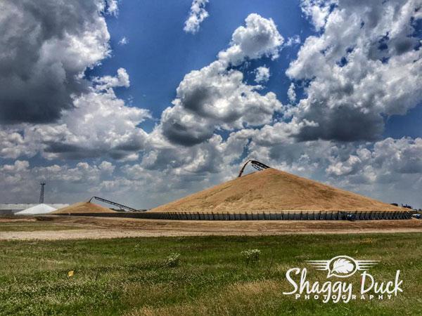 wheat-harvest-piles