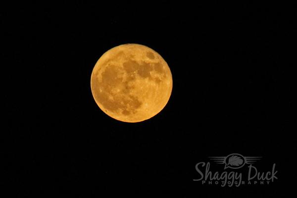 moon-superduper-2016